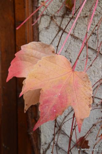 les tons roses,choux frisés,automne 087.JPG