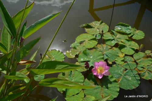 les jardins d'eau de Carsac 123.JPG