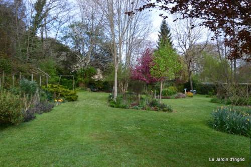 paquerettes,arums,laurier palme,jardin 061.JPG