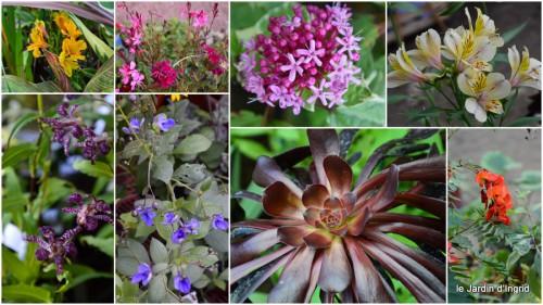 2013-10-06 mariage,jardin,la Brande,figues1.JPG