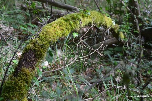 jardin,st Astier,colline 051.jpg