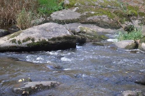 la Sedelle,étang de Riault,cyclamens 068.jpg