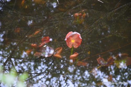 filles, fleurs printemps,semis 044.JPG