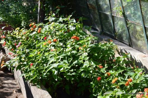jardin octobre,chez Marylaur,Arnaud ,Ariane,la mer,sauges 228.JPG