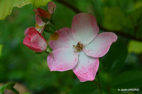 potager,chenille,pour le 18 juin,tour du jardin 041.JPG