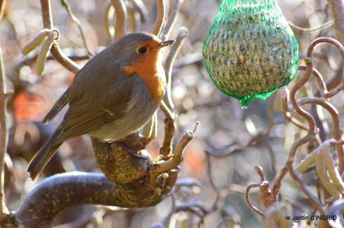 jardin givré,oiseaux 049.JPG