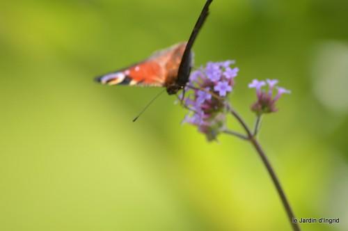 coeur des fleurs,papillons,libellules 120.JPG