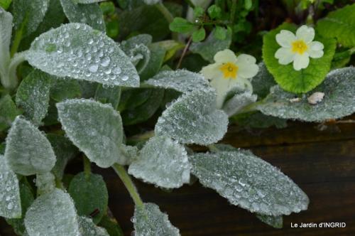 jardin (3 semaine de mars) 064.JPG