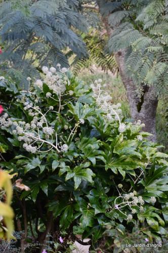 ménage automne,plectanthrus,feuillages 133.JPG