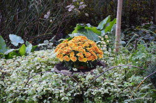 ménage automne,plectanthrus,feuillages 127.JPG