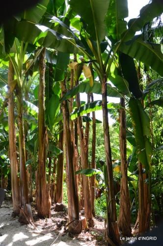 bambous Roque Gageac,jardin,bouquet 144.JPG