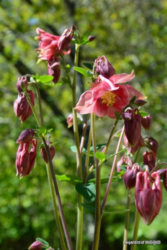 mésanges,escargots,ros. de banks,abeilles,Monpazier,Banes,Forêt 158.JPG