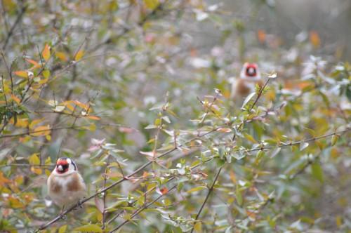 les oiseaux sur terrasse 020.JPG