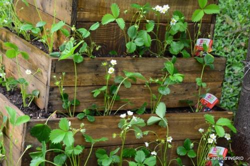 pyramide de fraisiers,toit végétalisé 020.JPG