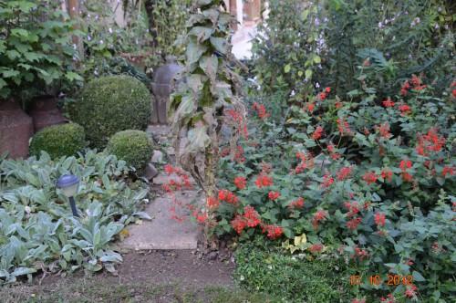 citrouilles,jardin,Combarel 040.JPG