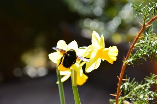 jardinière,insectes,achats 012.JPG