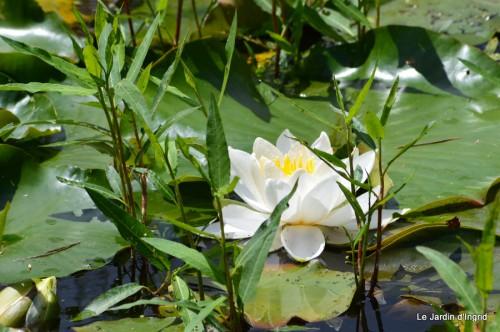 la mare,pt jardin,passiflore,Sophie,le canal,vues jardin 058.JPG
