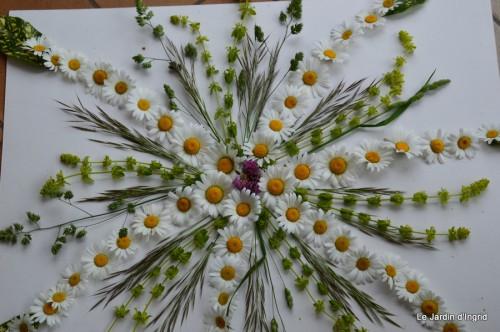 fleurs Beaumont,bouquet,tableau,serre,plants 047.JPG