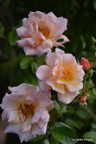 jardin,fruits,Caro,papillons,manthe religieuse,Lalinde 030.JPG