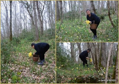 2018-03-09 les jonquilles des bois.jpg
