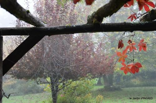 brouillard le matin d'automne 054.JPG