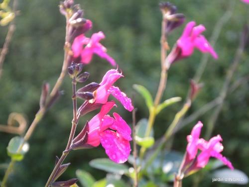 jardin,troc graines,coucher de soleil,la Brenne 040.JPG