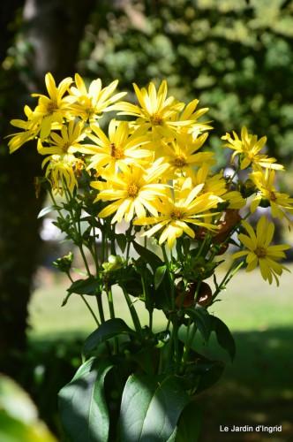 jardin,puces Lasmonzie,asters 126.JPG