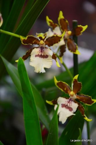 Orchidées,Noel jardiland,lever du soleil 029.JPG