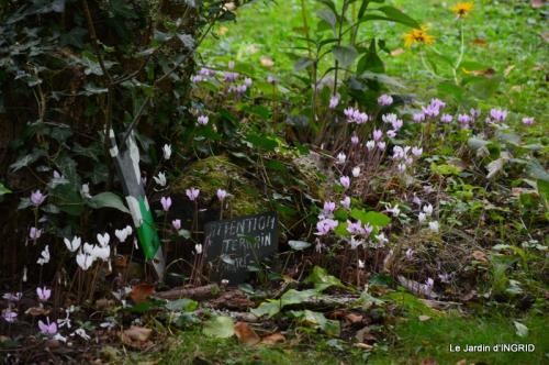 jardin ,bouquet 053.JPG