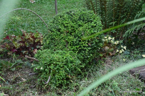 dahlias,jardin,puces st Avit Seigneur,Paniers Issigeac,Romane 291.JPG