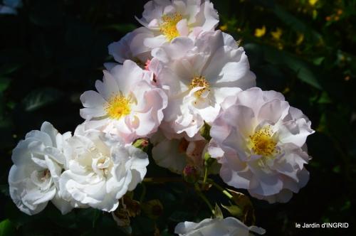 le jardin de Frescati,roses 081.JPG