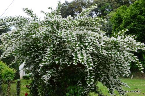Roses du jardin,soirée Monpazier,puces Eymet 190.JPG
