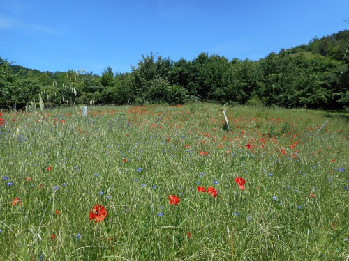 Normandie,jardin Monet,baie de Somme,chez Marylaur 235.JPG