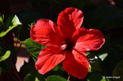 jardin début d'automne ,Sophie,rouge 091.JPG
