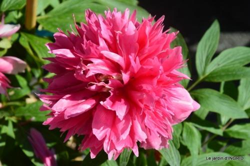 muguet,féte des fleurs Lalinde,jardin 079.JPG
