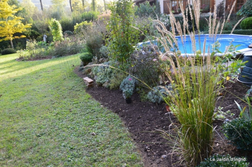 jardin,insectes,paillote,chrysanthèmes,rouge-gorge 137.JPG