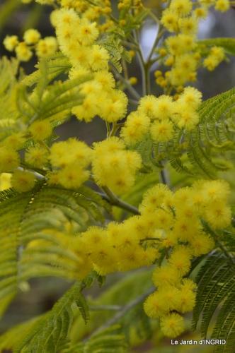 mimosa,travaux,fin de Nikky 002.JPG