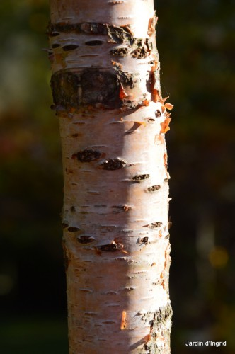 troncs,automne,vieilles photos 043.JPG