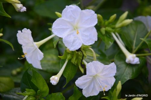 Fleurettes,Dordogne,jardin 128.JPG
