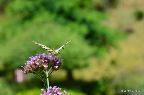 datura,papillon,Meyrals,déco Bergerac,bignonia 040.JPG
