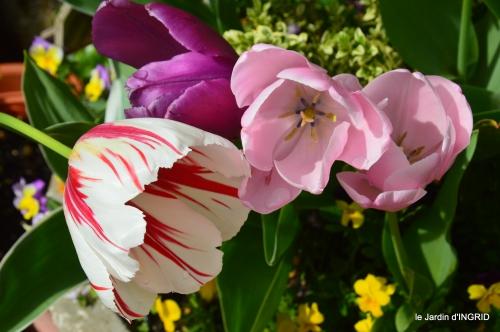 jardin printemps 134.JPG