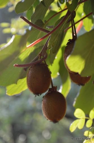 jardin,fruits,Caro,papillons,manthe religieuse,Lalinde 061.JPG