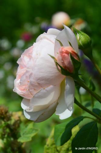 jardin,papillons,Cadouin,légumes,Sophie, 089.JPG