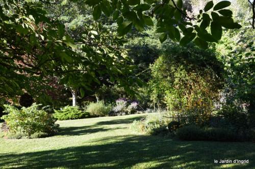 jardin,asters,fleurs blanches,chatte,rosiers roses 048.JPG