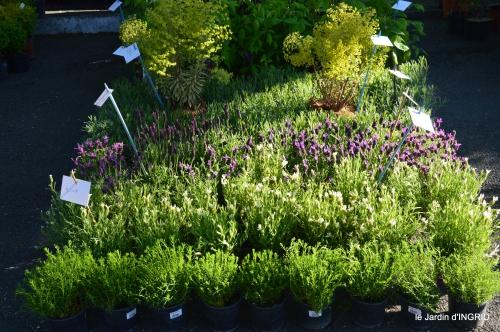 coquelicots,fête des fleurs Lalinde,fouleix,jardinage 052.JPG