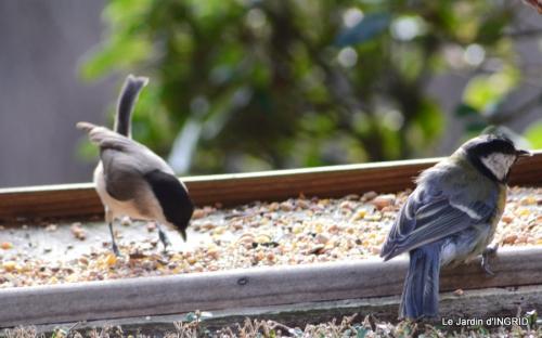 les oiseaux,les poules d'eau 080.JPG