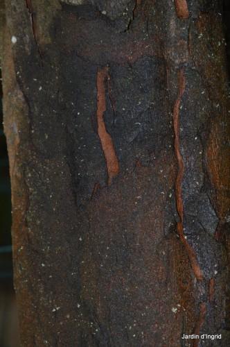 troncs,écorces,statue,SOL 017.JPG