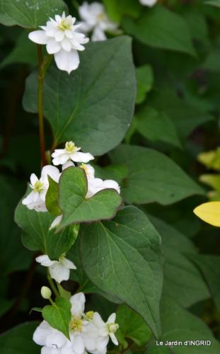 fleurs,roses,le cygne,les pts fruits 064.JPG