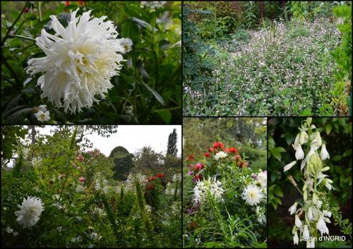 2016-09-13 bouquet,jardin de Monet,les vaches,Pourville sur mer8.jpg