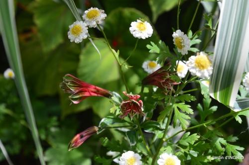jardin,papillons,Cadouin,légumes,Sophie, 058.jpg